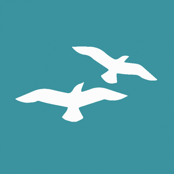 seabirds-2